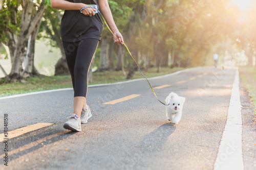 Fototapeta Woman exercise walking with Bichon dogs in park.