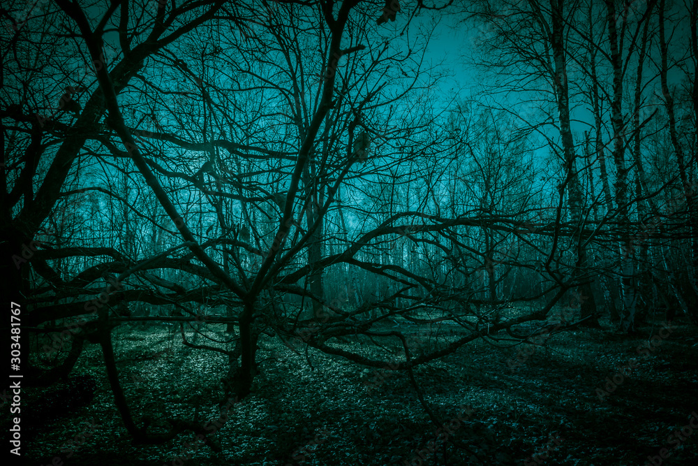 Fototapety, obrazy: Horror dense ghostly dark forest. Scary creepy night landscape with clumsy tree branches against the backdrop of the moonlight, mystical glow and strange paranormal shadows in the dusk of darkness
