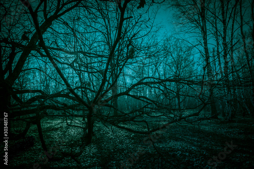 obraz PCV Horror dense ghostly dark forest. Scary creepy night landscape with clumsy tree branches against the backdrop of the moonlight, mystical glow and strange paranormal shadows in the dusk of darkness