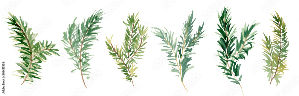 Fototapeta Watercolor fir branches hand drawn illustration