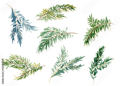 Watercolor fir branches hand drawn illustration Fototapeta