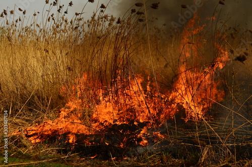 fire burn grass Canvas-taulu