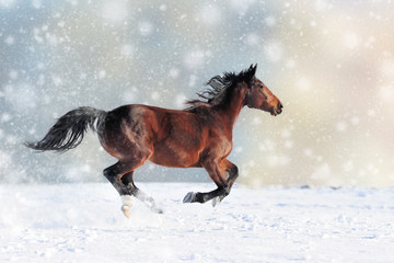 Horse in a snow on Christmas background