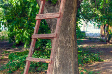 Old Wooden Ladder Leaning Against The Tree