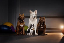 Group Of Different Breed Dogs Posing Together
