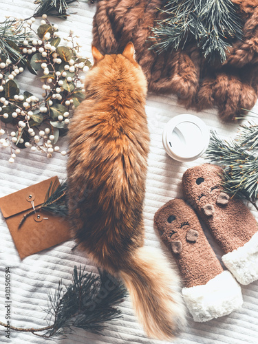 Ginger cat examines winter things : fir  branches, funny kitten socks,wreath, fur blanket. Cozy winter concept. Sweet home scene. Top view. Christmas joy. Insta style. Modern - 303501594