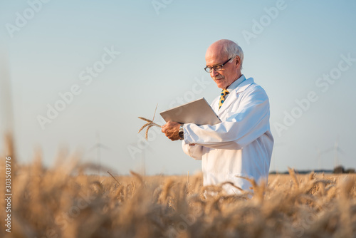 Researcher doing field test on new kinds of grain and wheat Fototapeta