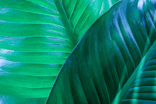 Abstract Green Leaf Textures On Dark Blue Tone, Natural Green Background
