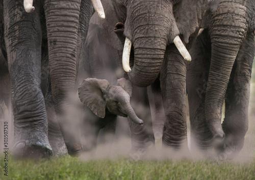 Afrikanische Elefant (Loxodonta africana) Gruppe mit Jungtier von vorne, Kenia, Ostafrika