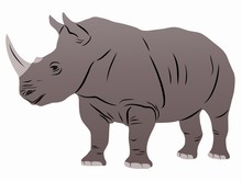 Isolated Illustration Of Rhino , Vector Drawing