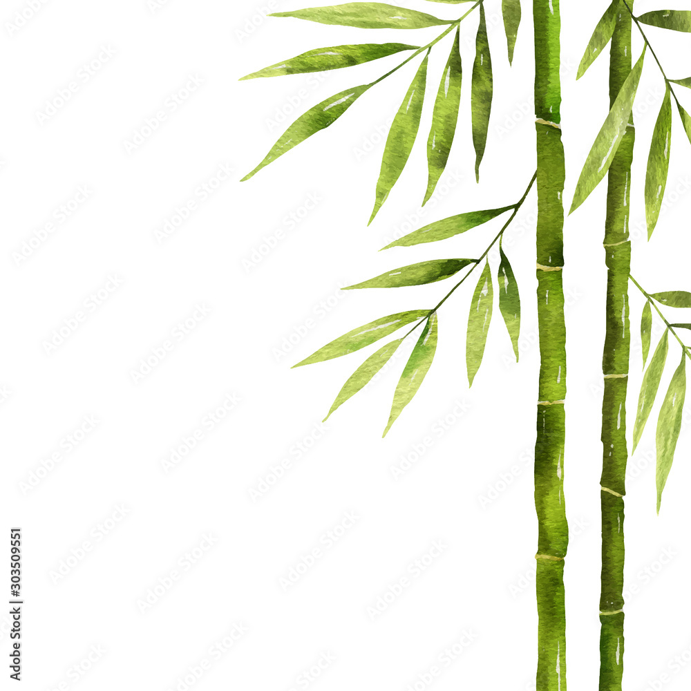 Fototapety, obrazy: Watercolor bamboo stem with green leaves and copy space.