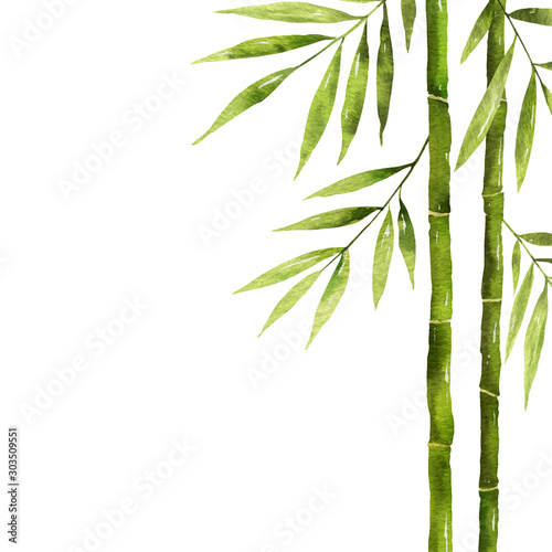 Watercolor bamboo stem with green leaves and copy space.