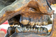 Close Up Image Of Skull At The...