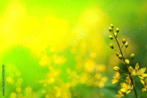 Foto auf Leinwand Gelb Closeup nature view of green yellow leaf in garden at summer. natural green plants landscape using as a background or wallpaper