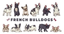 French Bulldogs. Vector Bulldo...