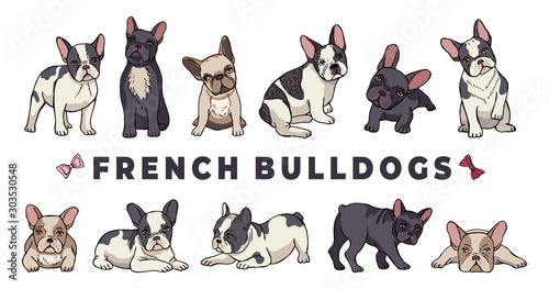 Fototapeta French bulldogs. Vector bulldog set. Funny cartoon puppy isolated on white background. Puppy bulldog, purebred dog funny illustration obraz