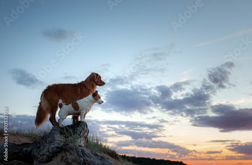 Two dogs stand on a log against the backdrop of sunset at sea Fototapete