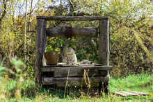 A Beautiful Cat Sits On An Old Village Well With A Bucket.