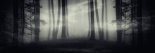 Surreal Dark Forest Panorama, ...