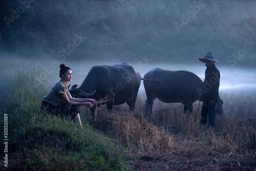 Obraz An adult farmer poses on a farmer's farm. Traditional buffalo raising at sunset - fototapety do salonu