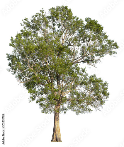 Cuadros en Lienzo  Tree isolated on white background. Clipping path included