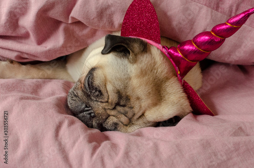 dog breed pug in unicorn hat sleeeping in master's bad Fotobehang