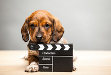 Puppy Portrait Clapper Board T...