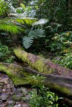 Lasy Deszczowe Australii