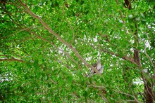 A Pair Of Dove On A Branch Wit...