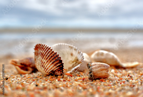 Fotografie, Obraz sea shell on the beach