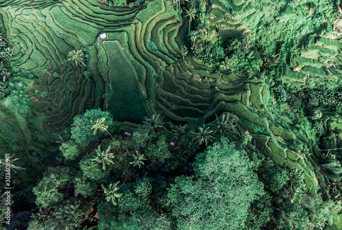 Foto auf Leinwand Olivgrun Aerial drone view. Tegallalang near Ubud of the island Bali in indonesia in southeastasia.