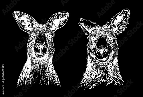 Graphical set of kangaroo isolated on black background,vector engraved illustrat Canvas Print