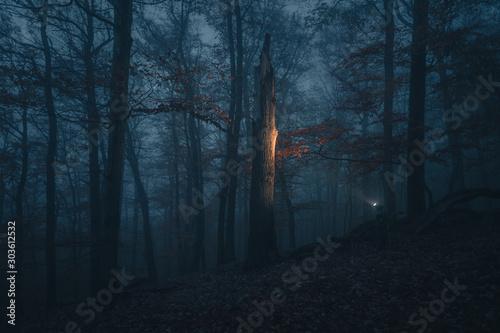 Obraz na plátně dunkler Wald