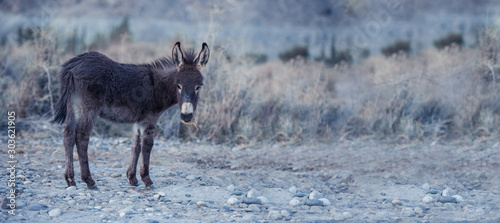 Photo Donkey with natural landscape in Nubra valley, India.