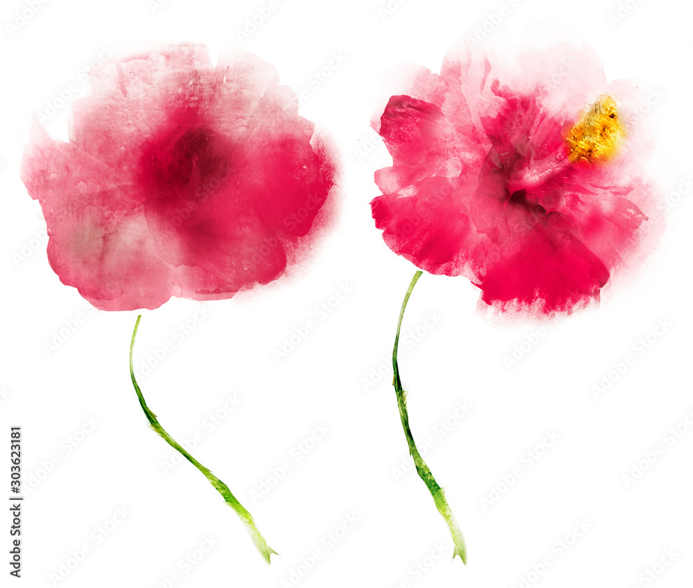 Fototapety, obrazy: Watercolor flowers , isolated on white background