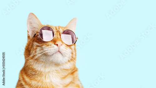 In de dag Kat Closeup portrait of funny ginger cat wearing sunglasses isolated on light cyan. Copyspace.