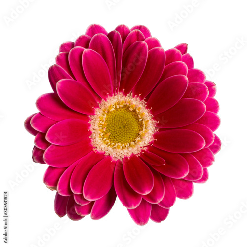 Top view of fuchsia Gerbera flower. Isolated on white background. Wallpaper Mural