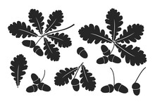 Oak Leaf And Acorns. Isolated ...