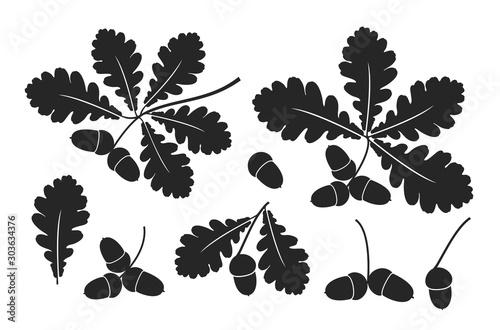 Cuadros en Lienzo Oak leaf and acorns. Isolated oak on white background