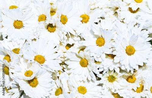 Obraz na plátně  flondo floral de un ramo de flores blancas