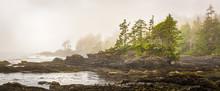 Misty Shoreline Of Botany Bay On West Coast Of Vancouver Island, British Columbia, Canada, With Sun Beginning To Beak Through The Fog.