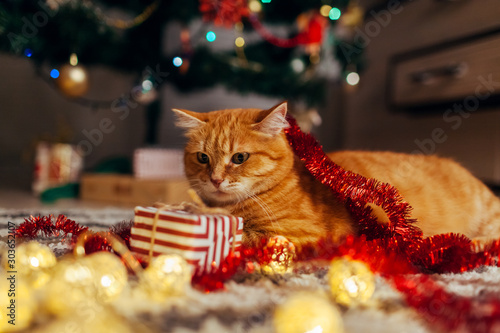 Tuinposter Kat Ginger cat playing with garland and gift box under Christmas tree. Christmas and New year concept