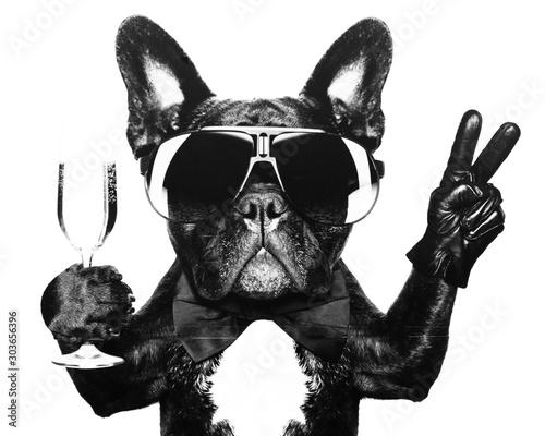 dog with eyeglasses