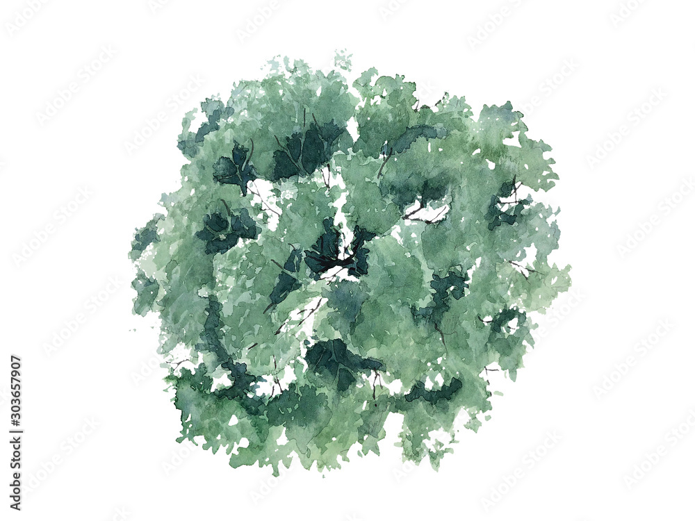 Fototapety, obrazy: The shape of the watercolor tree top view for landscape design