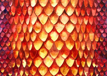 Red-orange Pattern Texture Of Watercolor Of Various Sizes Of Fish Skin Scales