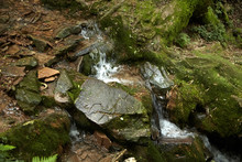 Green Deciduous Forest With A Small Stream, A Waterfall And Moss Covered Stones. Beautiful Landscape Of Summer Nature, France, Europe