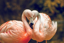 Pink Flamingo In Zoo