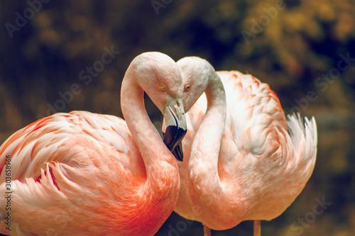 Foto auf Leinwand Flamingo pink flamingo in zoo