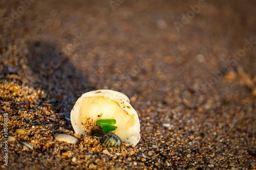 Fotografering concha na praia