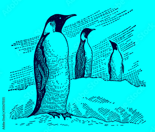 Three emperor penguins aptenodytes forsteri standing in a snowy landscape, on a blue background Canvas Print